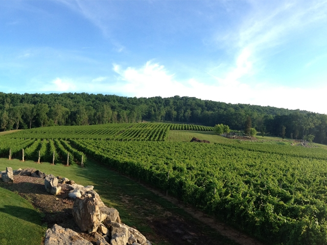Picturesque Alba Vineyard