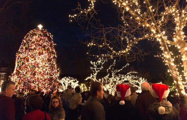 Christmas lights in Princeton, New Jersey