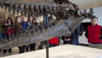 Written in the Rocks: Fossil Tales of New Jersey