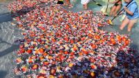 JDRF/FARE Crab Race