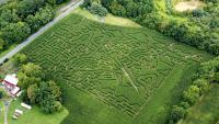 Corn Maze Train