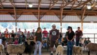 Garden State Sheep Breeders 24th Annual Sheep and Fiber Festival