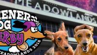 Weiner Dog Derby, Fireworks & Fan Appreciation Night