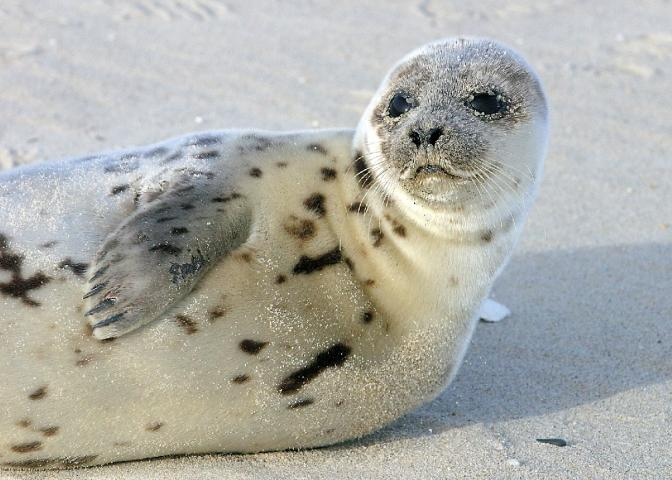 The Marine Mammal Stranding Center rescues dozens of seals from New Jersey beaches every winter.