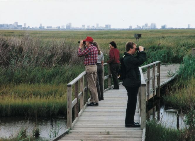 Wildlife Refuge with Atlantic City Backdrop