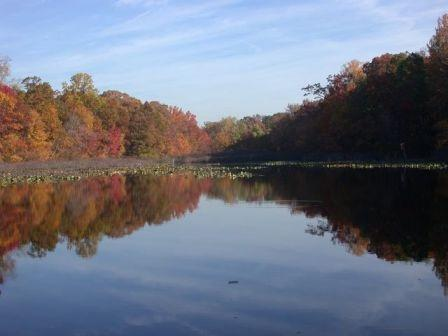 Pfister's Pond at Tenafly Nature Center