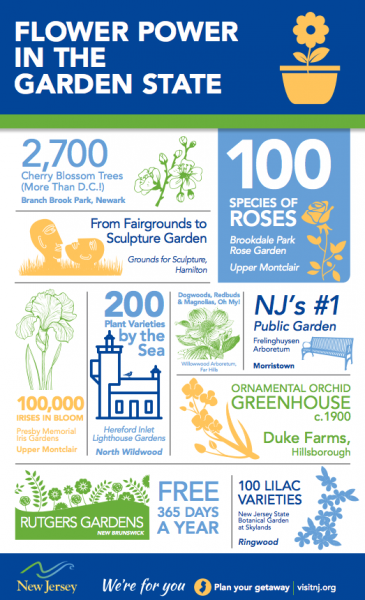 Infographic - Flower Power in the Garden State